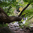 吐竜の滝と大木