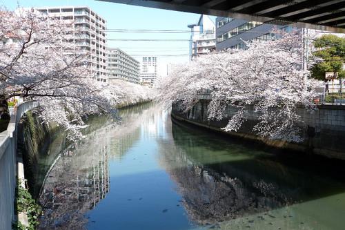 目黒川(五反田付近)