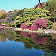 小石川植物園日本庭園