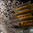 東寺 桜のライトアップ