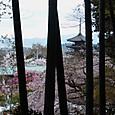 高台寺の竹林より八坂の塔